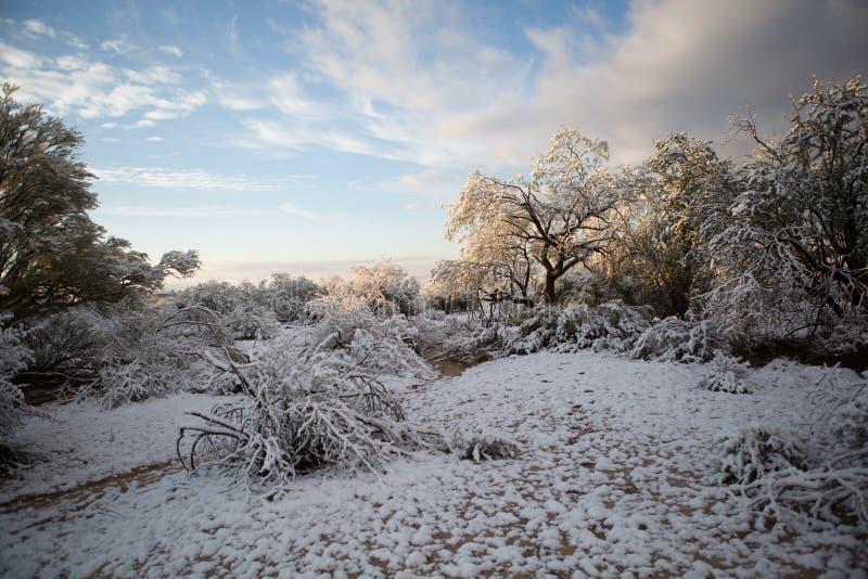αφήστε το χιόνι στοκ φωτογραφία με δικαίωμα ελεύθερης χρήσης