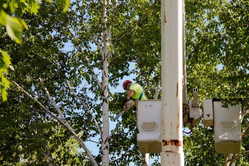 Αφαίρεση δέντρων που χρησιμοποιεί έναν κάδο βραχιόνων στοκ φωτογραφία με δικαίωμα ελεύθερης χρήσης