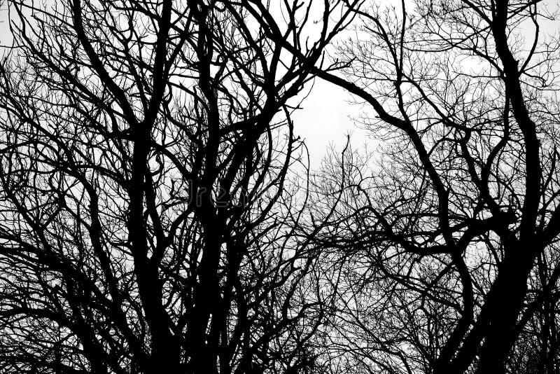 Αφηρημένα δέντρα στοκ εικόνα