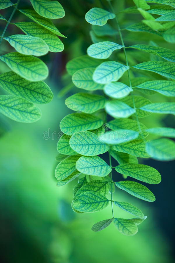 αφηρημένα πράσινα φύλλα στοκ φωτογραφία