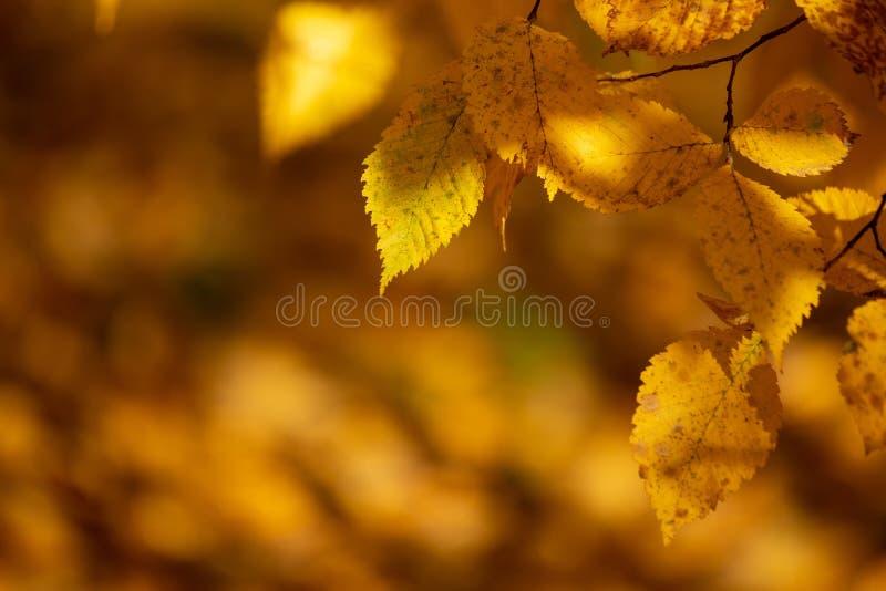 Αφηρημένα φθινοπωρινά υπόβαθρα για το σχέδιό σας στοκ φωτογραφία με δικαίωμα ελεύθερης χρήσης