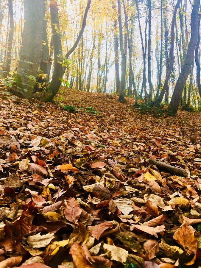 αφηρημένα φύλλα ανασκόπησης φθινοπώρου στοκ φωτογραφία με δικαίωμα ελεύθερης χρήσης