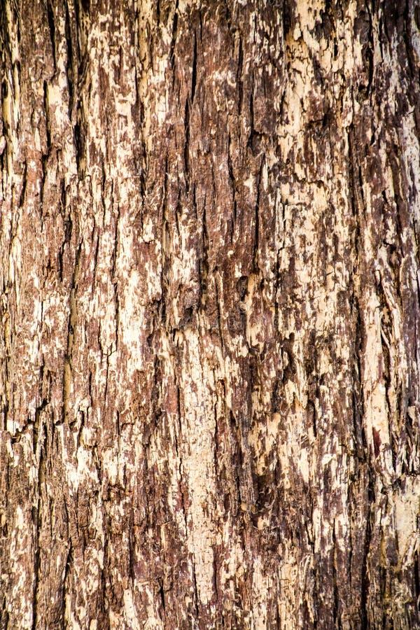 Αφηρημένες συστάσεις φλοιών δέντρων στο δάσος στοκ εικόνα