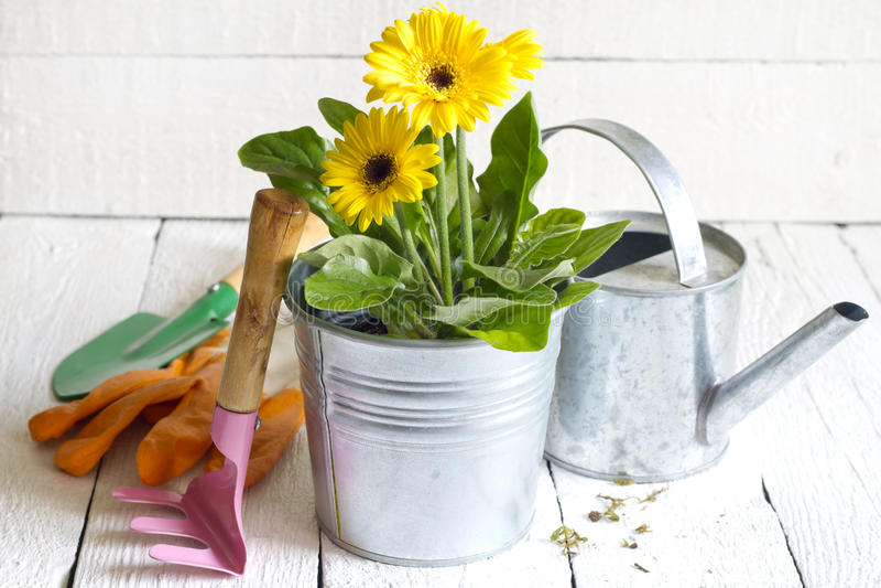 Αφηρημένη έννοια κηπουρικής λουλουδιών και εργαλείων κήπων στοκ φωτογραφίες