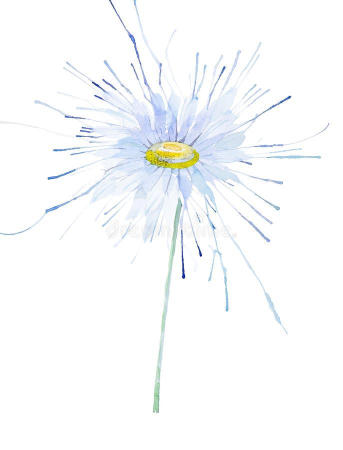 Αφηρημένη απεικόνιση Chamomile watercolor η ανασκόπηση απομόνωσε το λευκό ελεύθερη απεικόνιση δικαιώματος