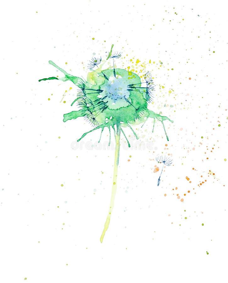 Αφηρημένη απεικόνιση watercolor των φωτεινών πολύχρωμων πικραλίδων που απομονώνεται στο άσπρο υπόβαθρο ελεύθερη απεικόνιση δικαιώματος