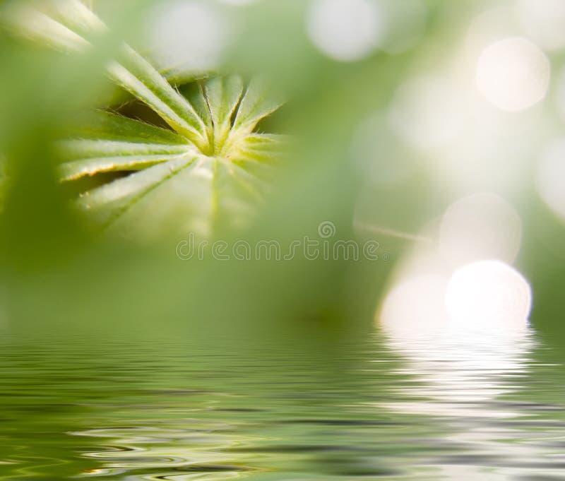 αφηρημένη εικόνα φύσης διανυσματική απεικόνιση