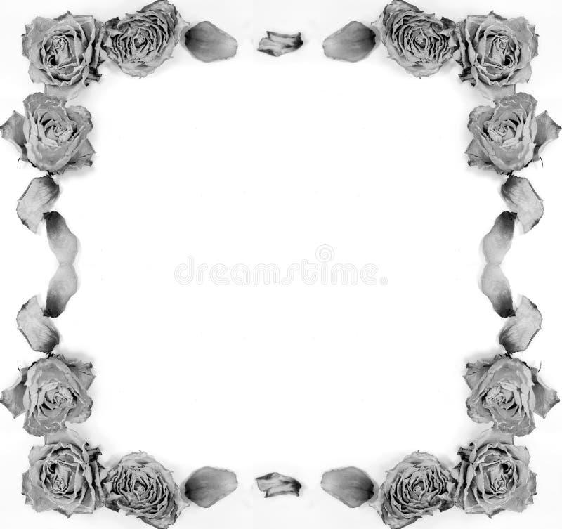 Αφηρημένη διακόσμηση - ξηρά τριαντάφυλλα, πέταλα, πλαίσιο για την επιστολή, ιστοχώρος στοκ εικόνες