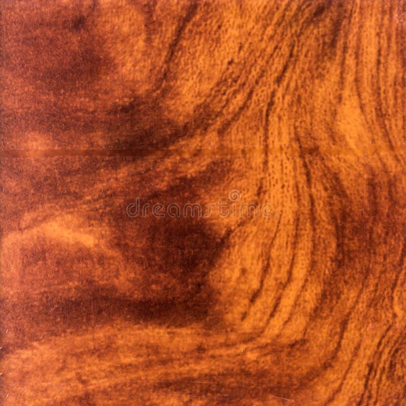 Αφηρημένη ξύλινη σύσταση με την εστίαση στο σιτάρι του δάσους Ξύλο ριζών στοκ φωτογραφία με δικαίωμα ελεύθερης χρήσης
