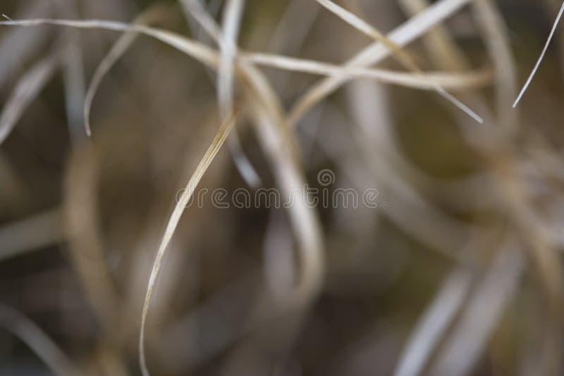 αφηρημένη σύνθεση θαμπάδων στοκ φωτογραφίες με δικαίωμα ελεύθερης χρήσης