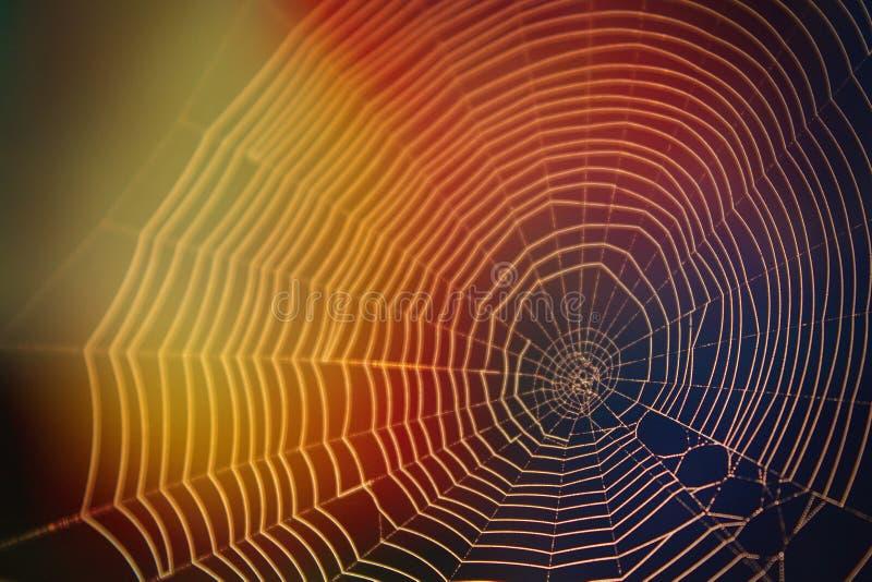Αφηρημένη φωτογραφία φύσης του Ιστού αραχνών στο φως του ήλιου με πολλά χρώματα στοκ εικόνα με δικαίωμα ελεύθερης χρήσης