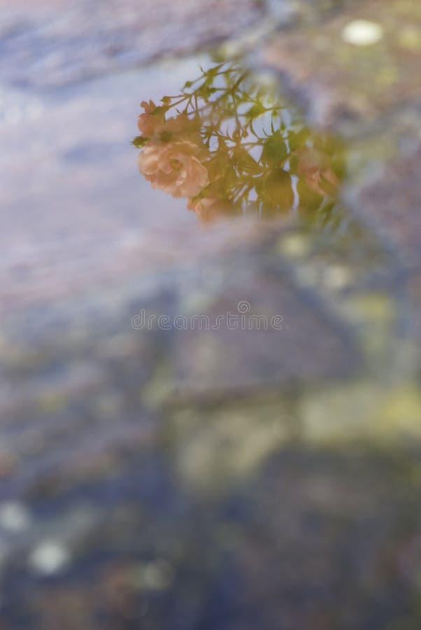 αφηρημένη φύση στοκ φωτογραφίες με δικαίωμα ελεύθερης χρήσης