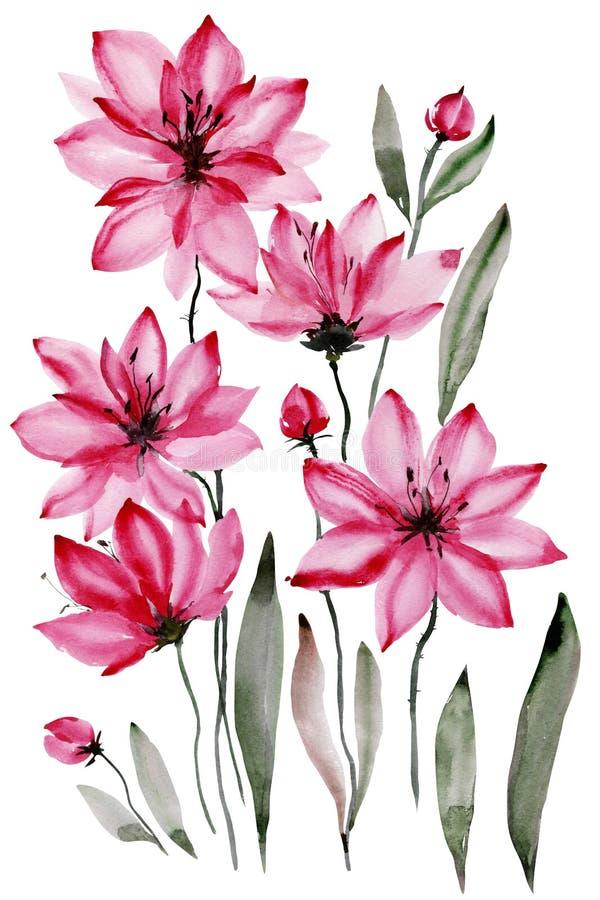 Αφηρημένη floral ανασκόπηση Όμορφα ρόδινα λουλούδια με τα μαύρα stamens που απομονώνονται στο άσπρο υπόβαθρο υψηλό watercolor ποι ελεύθερη απεικόνιση δικαιώματος