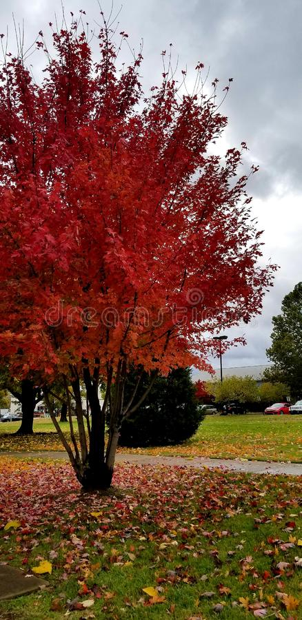 αφηρημένος φθινοπώρου φωτεινός χρωμάτων πτώσης κόκκινος ημι προτύπων φύλλων συμπαθητικός στοκ εικόνες με δικαίωμα ελεύθερης χρήσης