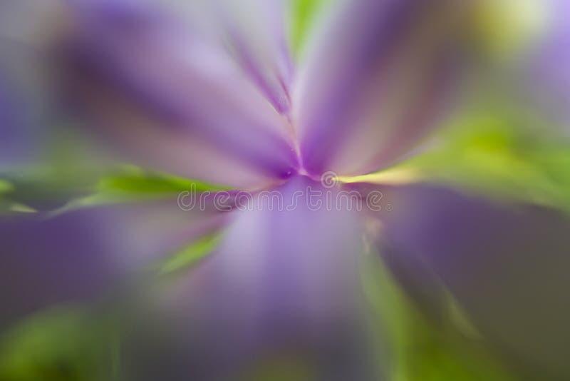 Αφηρημένος floral στοκ εικόνα