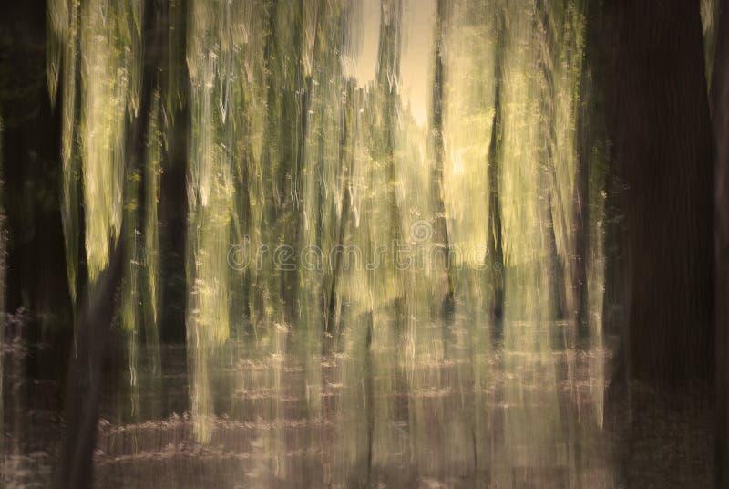 αφηρημένο δάσος στοκ εικόνες