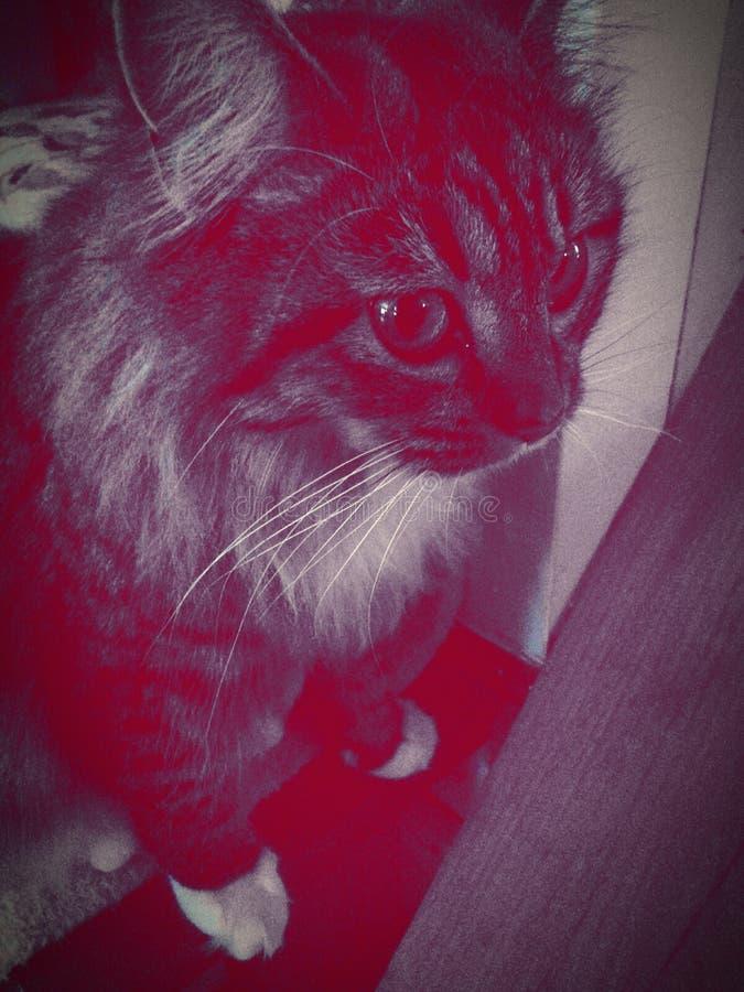 Αφηρημένο γατάκι στοκ φωτογραφίες