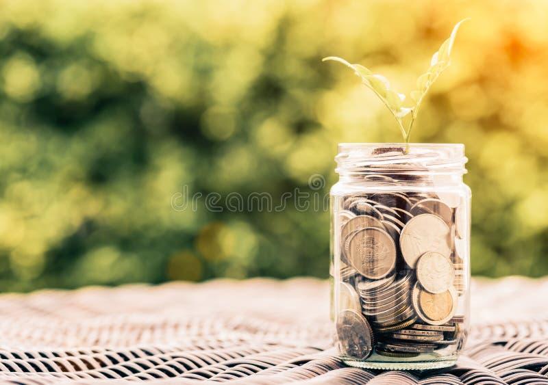 Αφηρημένο δέντρο μωρών αποταμίευσης χρημάτων στα νομίσματα βάζων γυαλιού στοκ φωτογραφία με δικαίωμα ελεύθερης χρήσης