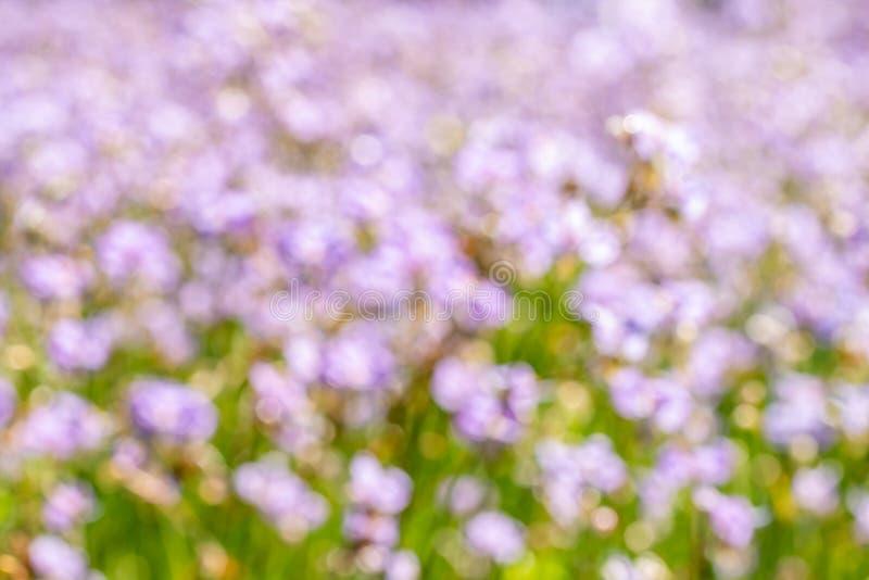 Αφηρημένο, θαμπό πορφυρό άνθη στοκ εικόνα