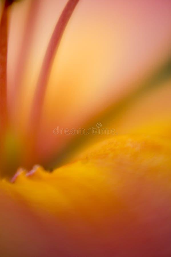 αφηρημένο λουλούδι λεπτομέρειας ανασκόπησης στοκ φωτογραφία με δικαίωμα ελεύθερης χρήσης
