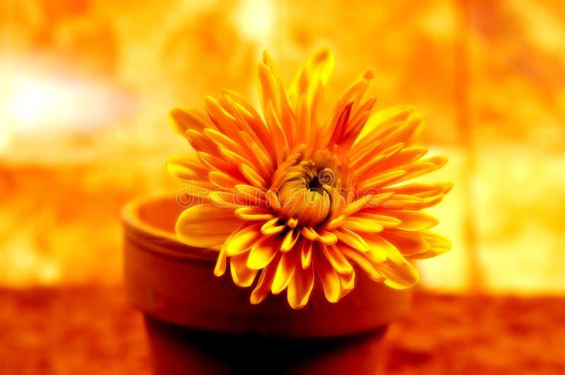 αφηρημένο λουλούδι 3 σε δοχείο στοκ φωτογραφία