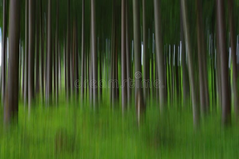 Αφηρημένο μουτζουρωμένο δάσος στοκ φωτογραφίες