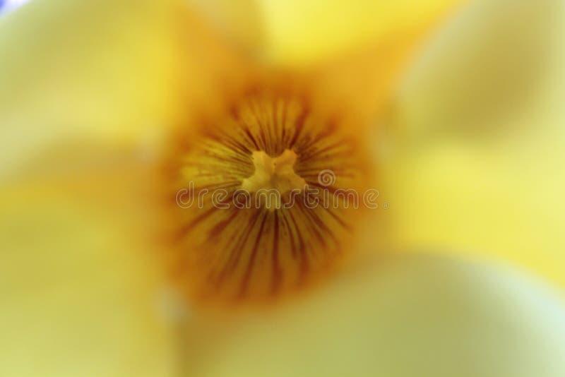 αφηρημένο λουλούδι κίτρι&n στοκ εικόνα με δικαίωμα ελεύθερης χρήσης