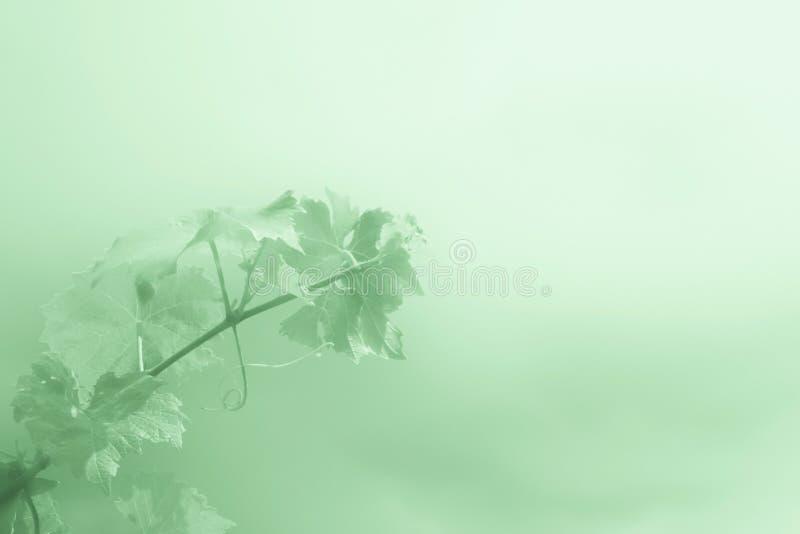 Αφηρημένο πράσινο υπόβαθρο με τον κλάδο των σταφυλιών στοκ εικόνες
