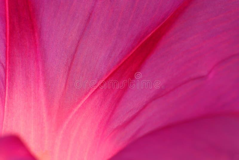 αφηρημένο ροζ πετάλων στοκ φωτογραφία με δικαίωμα ελεύθερης χρήσης