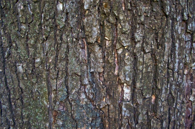 αφηρημένο δρύινο δέντρο σχεδίου φλοιών ανασκόπησης στοκ εικόνες