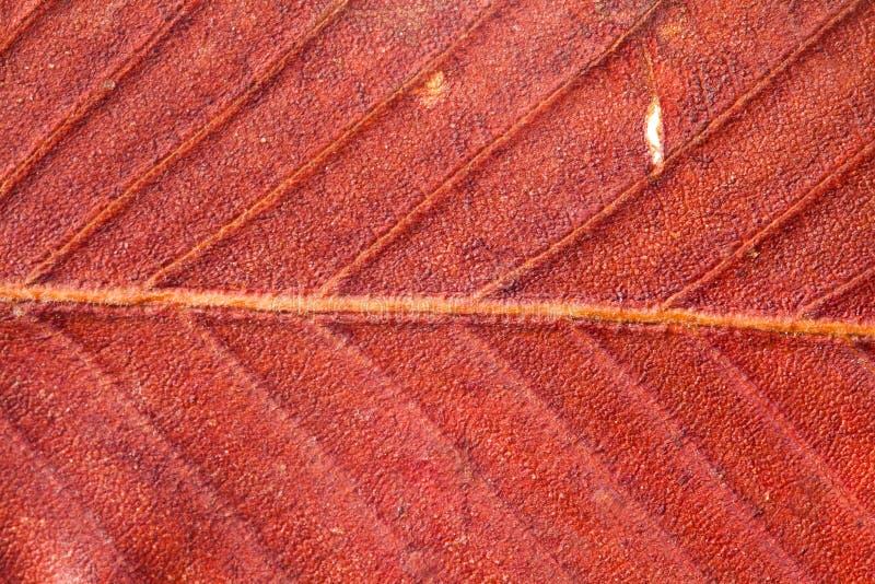 Αφηρημένο σχέδιο του φύλλου φθινοπώρου Κόκκινο χρώμα στοκ φωτογραφίες με δικαίωμα ελεύθερης χρήσης