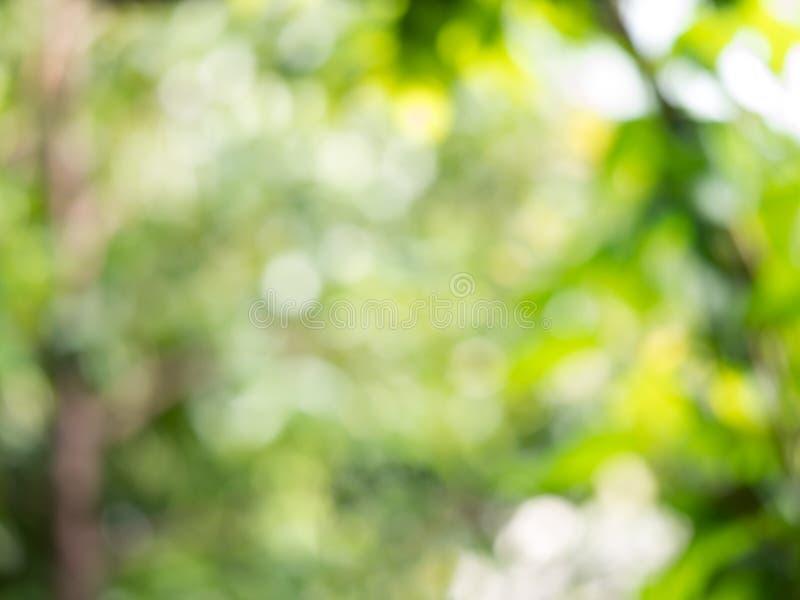 Αφηρημένο υπόβαθρο θαμπάδων bokeh βεραμάν από την πράσινη φύση δέντρων φύλλων στοκ φωτογραφίες