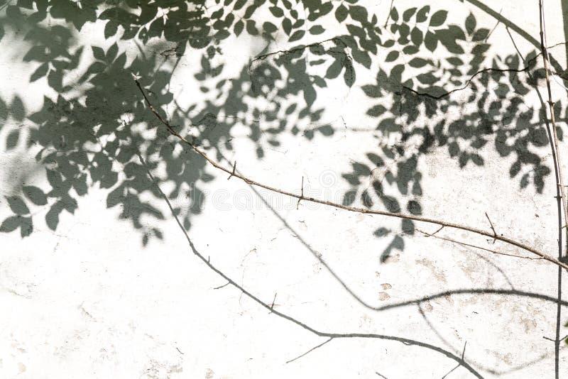 Αφηρημένο υπόβαθρο του φύλλου σκιών σε έναν άσπρο τοίχο μαύρο λευκό στοκ φωτογραφίες με δικαίωμα ελεύθερης χρήσης