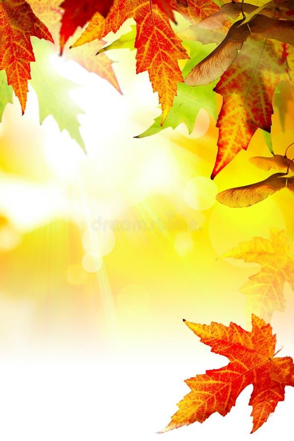 Αφηρημένο υπόβαθρο φθινοπώρου τέχνης με τα φύλλα στοκ φωτογραφία