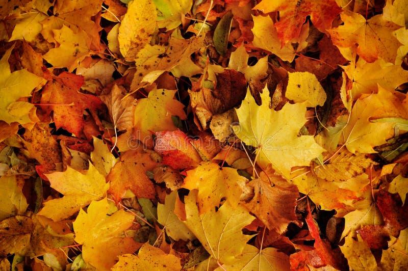 Αφηρημένο υπόβαθρο φθινοπώρου στοκ εικόνα
