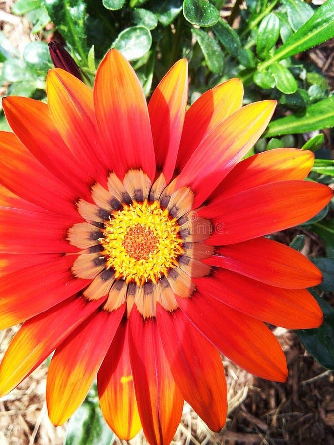 αφηρημένο φάσμα πετάλων λουλουδιών πυρκαγιάς στοκ εικόνα με δικαίωμα ελεύθερης χρήσης