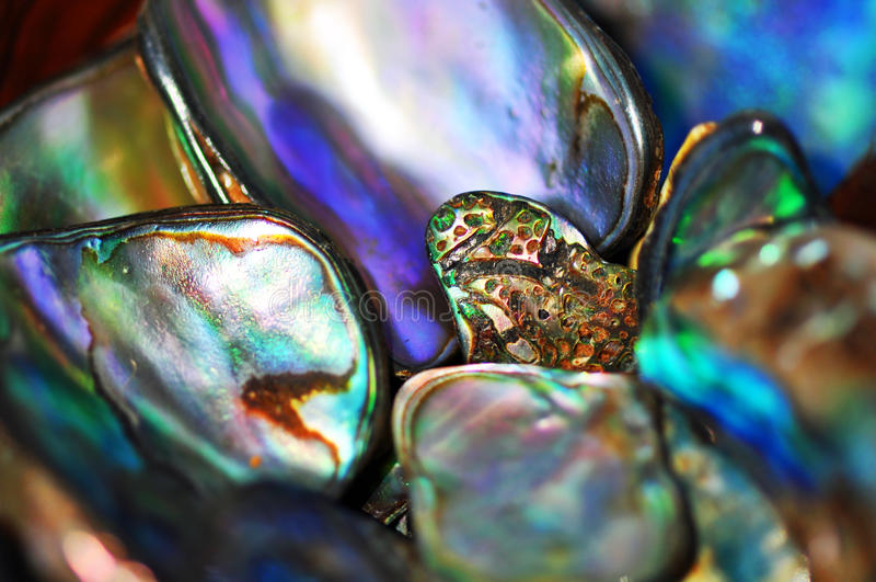 Αφηρημένο φωτεινό ζωηρό χρώμα υποβάθρου κοχυλιών paua στοκ εικόνες