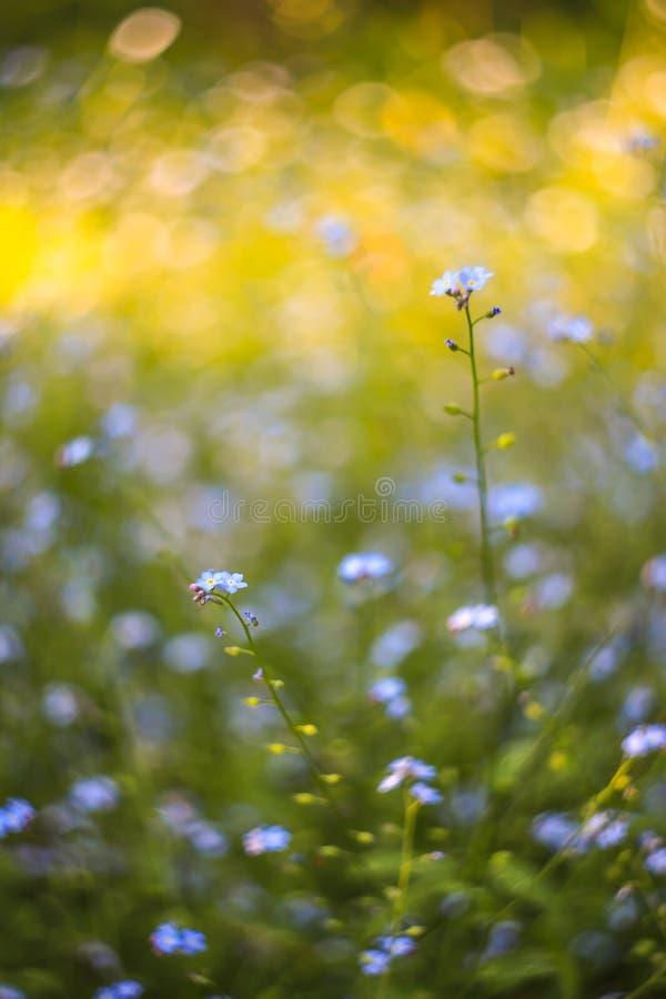 Αφηρημένο φωτεινό θολωμένο υπόβαθρο με την άνοιξη και καλοκαίρι με τα μικρές μπλε λουλούδια και τις εγκαταστάσεις Με το όμορφο bo στοκ εικόνα με δικαίωμα ελεύθερης χρήσης