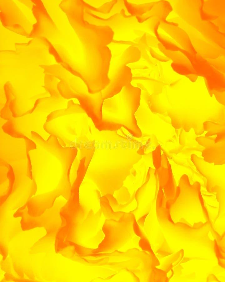 αφηρημένο φύλλο φθινοπώρο&u στοκ φωτογραφίες με δικαίωμα ελεύθερης χρήσης