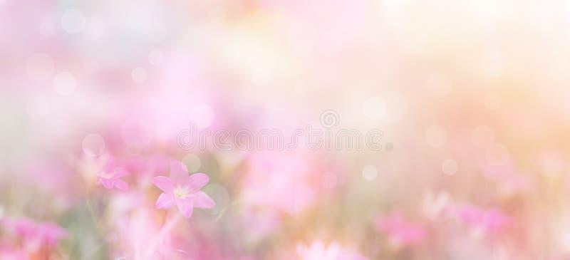 Αφηρημένο floral σκηνικό των πορφυρών λουλουδιών με το μαλακό ύφος στοκ φωτογραφίες