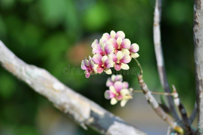 Αφηρημένο floral υπόβαθρο στην εκλεκτής ποιότητας ορχιδέα ύφους στοκ φωτογραφία