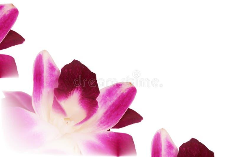 αφηρημένο orchid lei dendrobium στοκ εικόνες με δικαίωμα ελεύθερης χρήσης