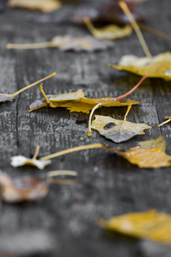 Αφθονημένος πίνακας πικ-νίκ στο δάσος στοκ φωτογραφία με δικαίωμα ελεύθερης χρήσης