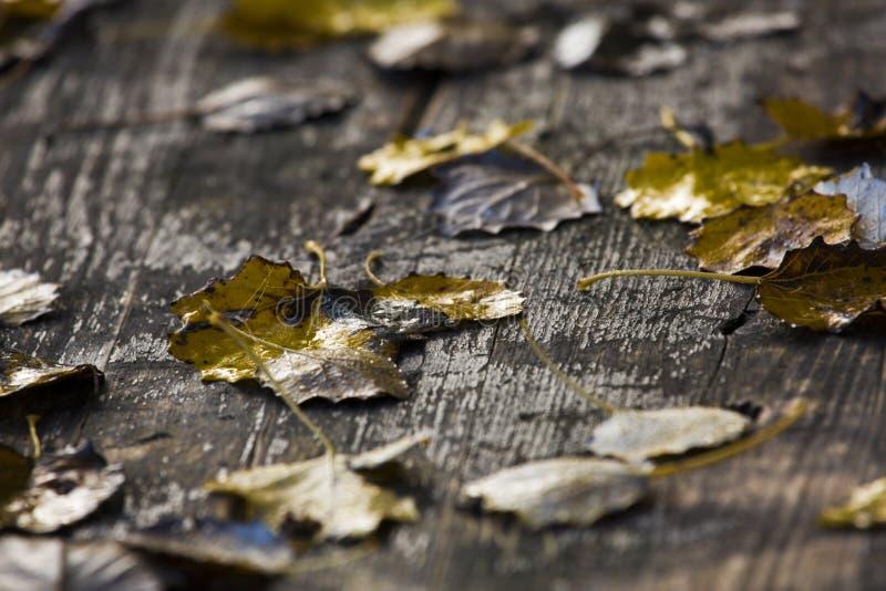 Αφθονημένος πίνακας πικ-νίκ στο δάσος στοκ φωτογραφίες
