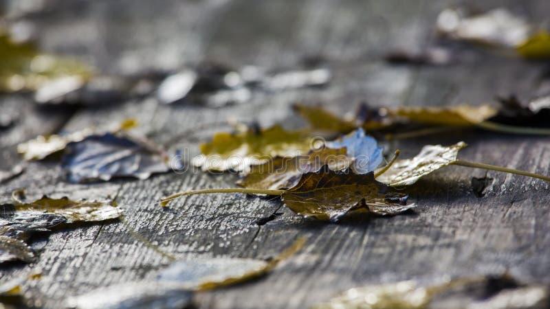 Αφθονημένος πίνακας πικ-νίκ στο δάσος στοκ φωτογραφίες με δικαίωμα ελεύθερης χρήσης