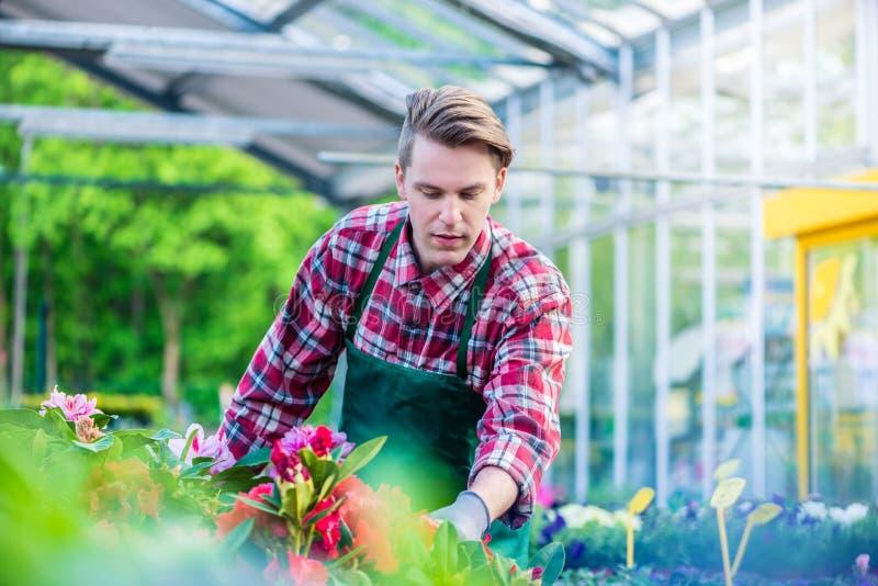 Αφιερωμένος ανθοκόμος κατά τη διάρκεια της εργασίας σε ένα σύγχρονο ανθοπωλείο με τα διάφορα λουλούδια στοκ φωτογραφίες με δικαίωμα ελεύθερης χρήσης