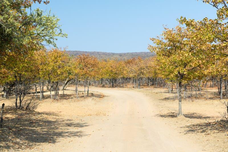 Αφρική το φθινόπωρο στοκ φωτογραφία με δικαίωμα ελεύθερης χρήσης