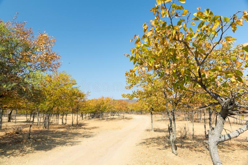 Αφρική το φθινόπωρο στοκ εικόνα με δικαίωμα ελεύθερης χρήσης