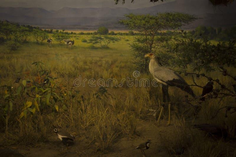 Αφρικανικά δάσος και ζώα στοκ εικόνες
