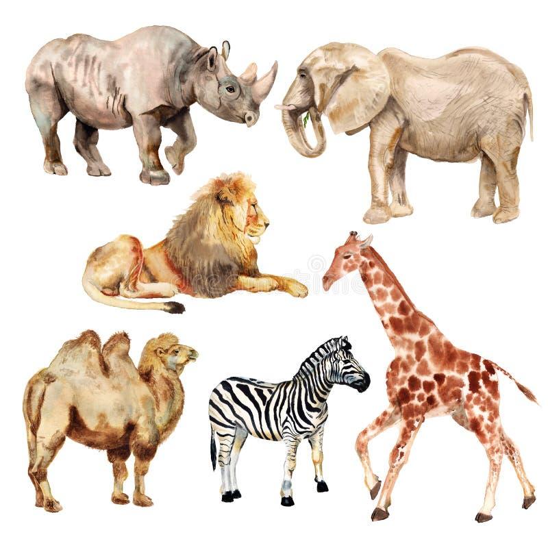 Αφρικανικά ζώα Watercolor ελεύθερη απεικόνιση δικαιώματος